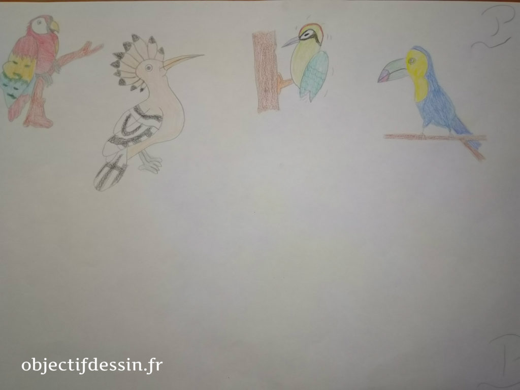 oiseaux P