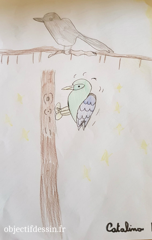 dessin oiseau2 Catalina