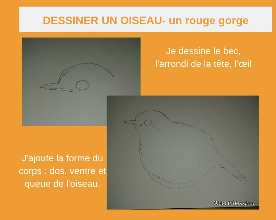 dessiner un rouge gorge (1)
