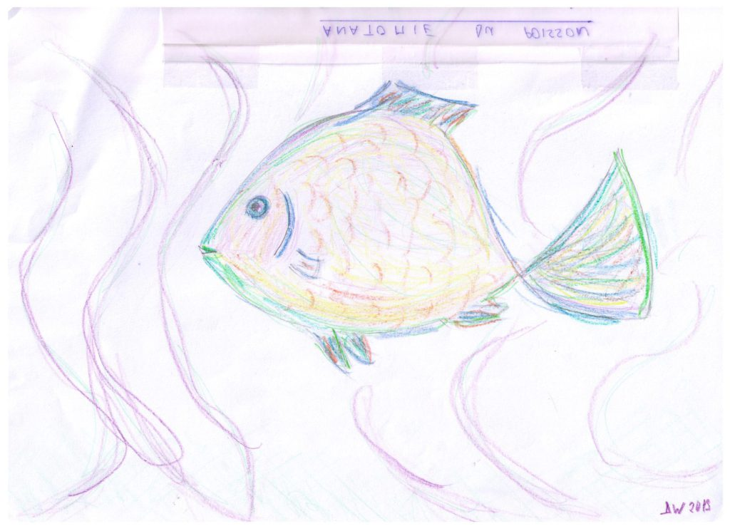 poisson Dinah