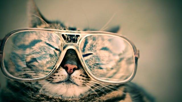 dessiner des lunettes