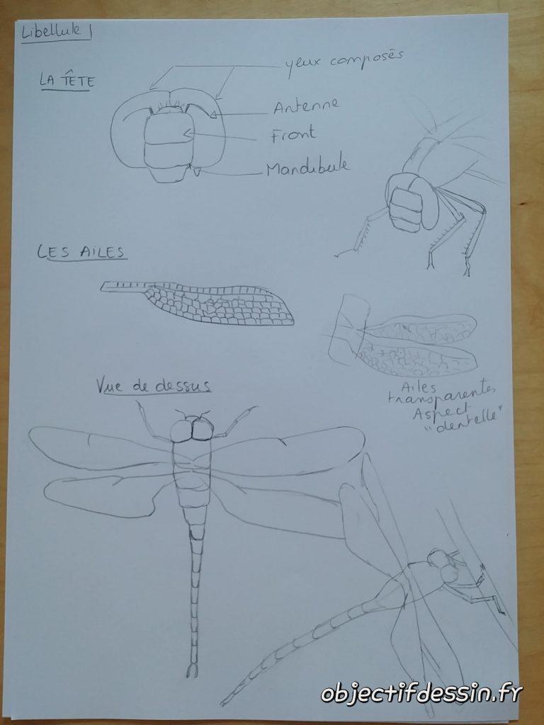 planche croquis libellule (2)