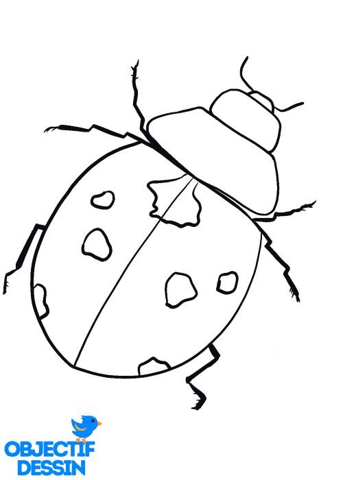 dessiner Les Pattes De La Coccinelle