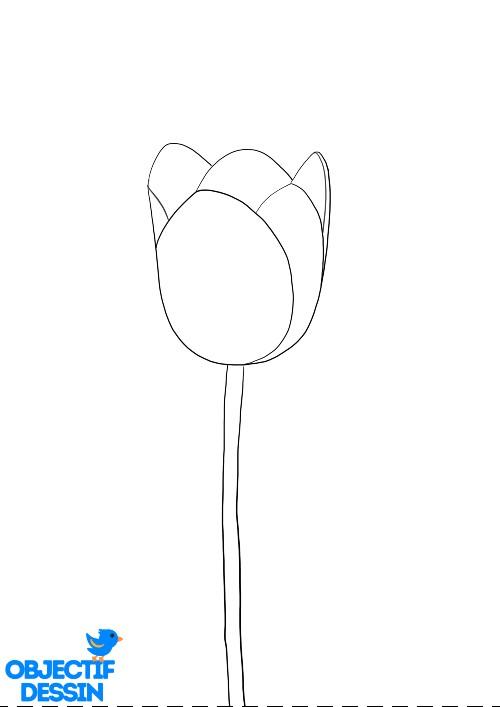 Dessin Fleur Tulipe (6)
