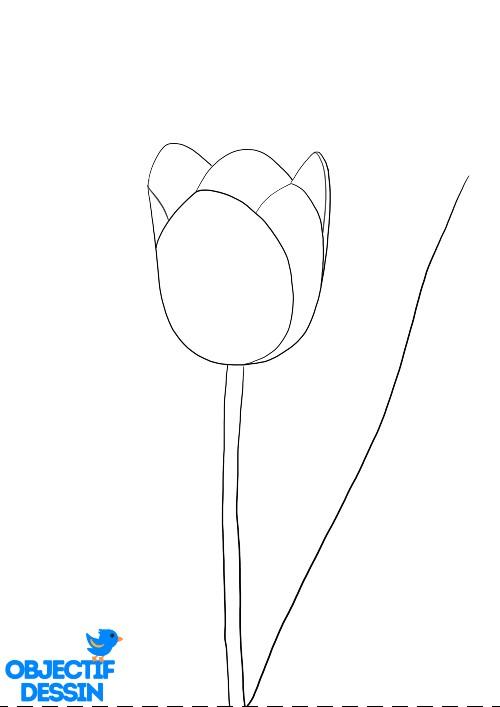 Dessin Fleur Tulipe (7)