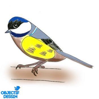 Dessin Oiseau Facile Couleur (15)