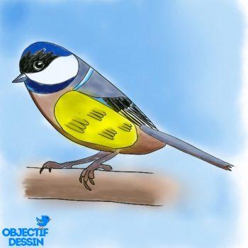 Dessin Oiseau Facile Couleur (20)