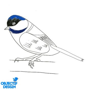 Dessin Oiseau Facile Couleur (3)