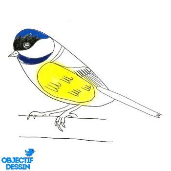 Dessin Oiseau Facile Couleur (4)