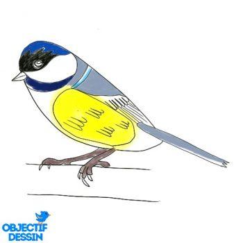 Dessin Oiseau Facile Couleur (7)