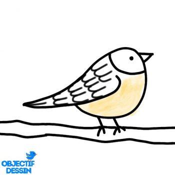 Dessin Oiseau Sur Branche Facile (14)