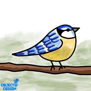 Dessin Oiseau Sur Branche Facile (23)