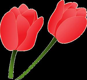 Modèle Dessin Tulipe (1)