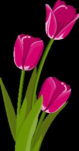 Modèle Dessin Tulipe (2)