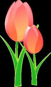 Modèle Dessin Tulipe (4)