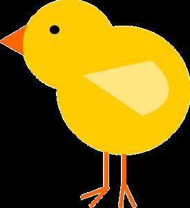Poussin pâques jaune